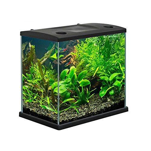 Migliore acquario per pesci opinioni e prezzi for Pesci per acquario piccolo
